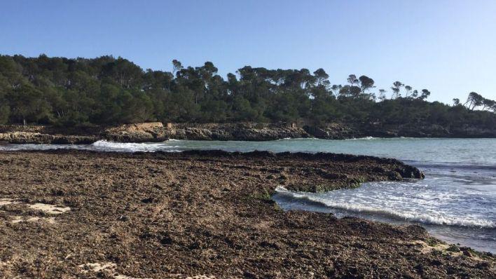 Un millón para arreglar playas y sistemas dunares de Baleares afectados por Gloria
