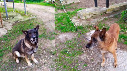 El Ayuntamiento de Palma niega la visita de la prensa a los perros policía