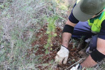 Cort organiza este sábado una nueva siembra de árboles en el parque Krecovic