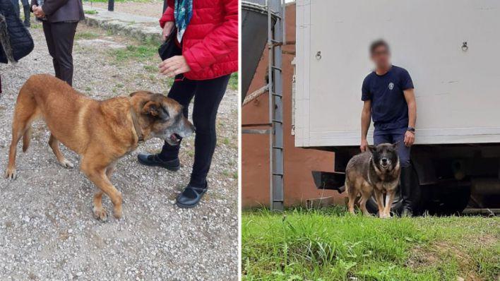 'Negar un hogar a los perros policía al final de sus vidas es irracional'