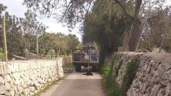 El conductor de un remolque arrastra a un perro a lo largo de 2 kilómetros en Montuïri