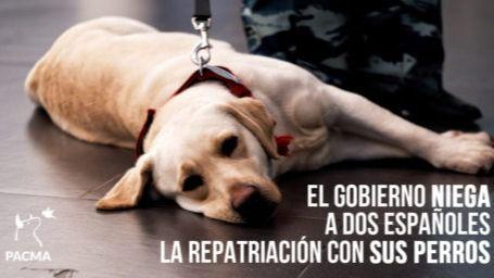 Niegan la repatriación de un matrimonio español si no deja abandonados a sus perros en Panamá