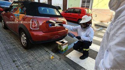 Los Bomberos de Palma retiran un enjambre de abejas de un vehículo estacionado