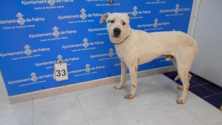 Cort asegura que los perros de Son Reus salen todos los días a pasear y jugar