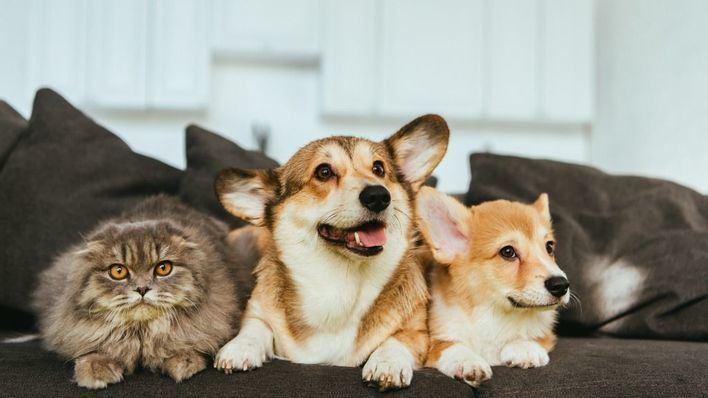 El confinamiento provoca estrés en gatos y aburrimiento en perros