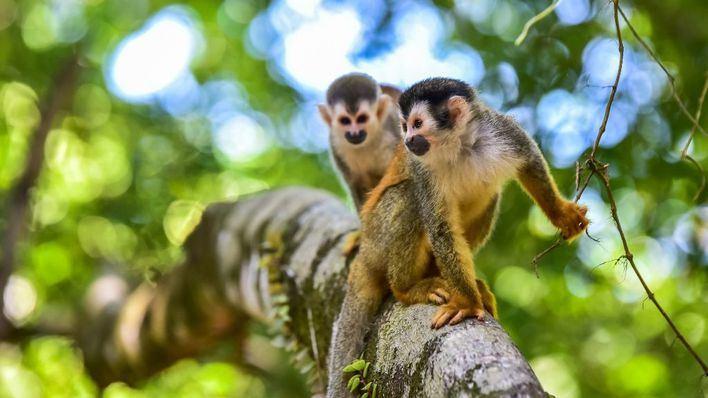 El tráfico ilegal de especies amenaza la salud humana