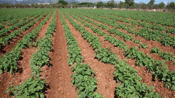 Baleares recibirá 1,6 millones para programas agrarios, ganaderos y de desarrollo rural