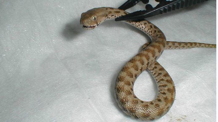 Anulan una sentencia a una constructora balear por la mordedura de una serpiente venenosa a un trabajador
