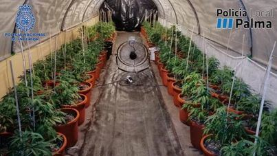 Tres golpes en una semana contra el abastecimiento de marihuana a Palma