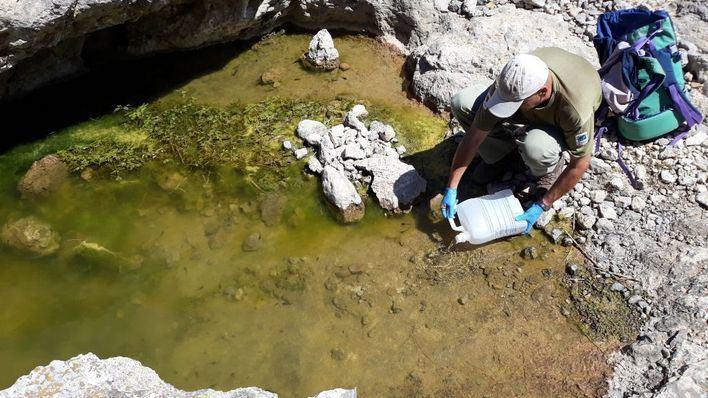 Liberan 647 larvas de 'ferreret' en el Paraje Natural de la Serra de Tramuntana