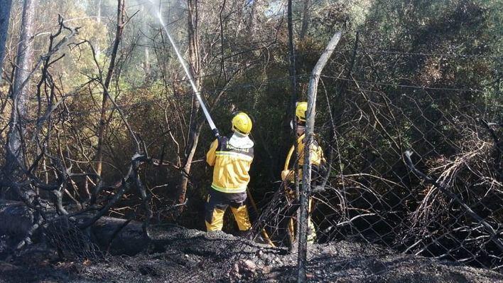 Un incendio calcina una pequeña extensión de pinar en Alcúdia