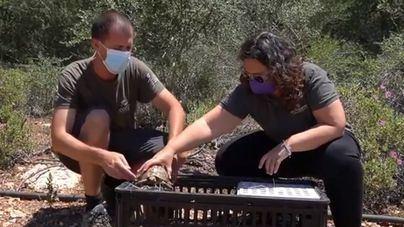 Liberan más de doscientas tortugas en Felanitx