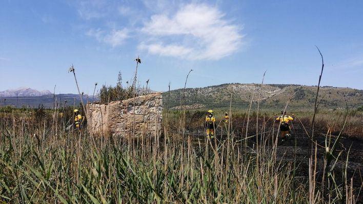 Alarma en Ses Jonqueres Veres por un incendio que quema 1,25 hectáreas de carrizo