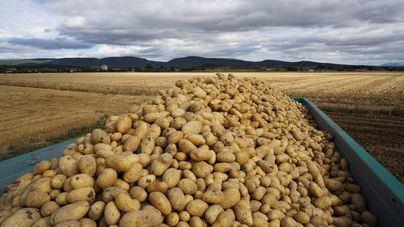 Mercadona comprará 2.400 toneladas de patata a productores de Baleares este año