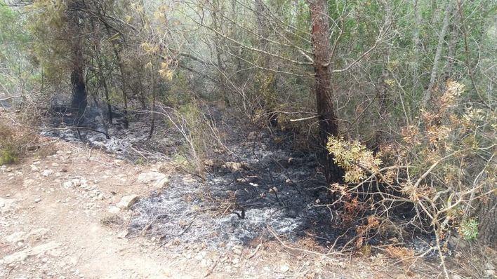 Extinguido un incendio en un pinar de Sant Antoni