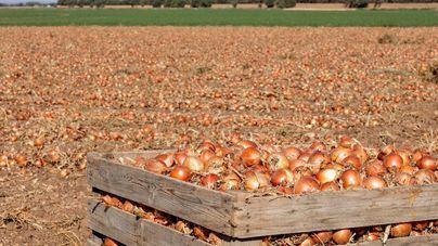 Mercadona comprará 85.000 toneladas de cebolla nacional en 2020