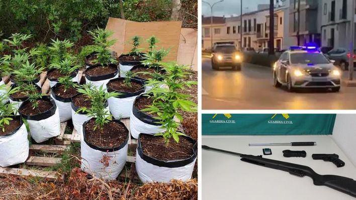 Golpe al cultivo de marihuana en Menorca
