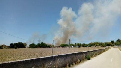 Dan por extinguido un incendio agrícola declarado entre Montuïri y Lloret