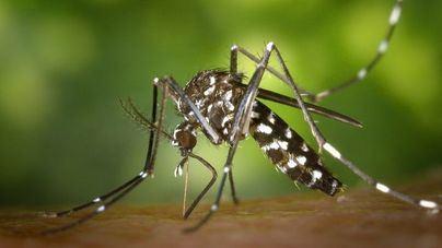 El mosquito tigre veranea en piscinas hinchables y segundas residencias