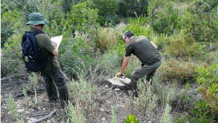 Alertan sobre la tala de más de 3.800 pinos en una finca de la Serra de Tramuntana