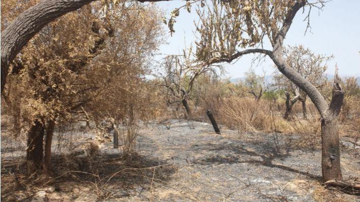 Aviso de riesgo extremo o muy alto de incendios en Baleares por el viento del nordeste