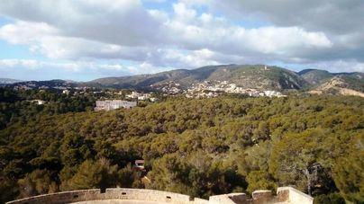 Palma ampliará a 10 metros cuadrados por residente sus zonas verdes en dos décadas
