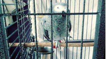 Incautados más de 280 animales de una red ilegal dedicada al comercio de especies protegidas