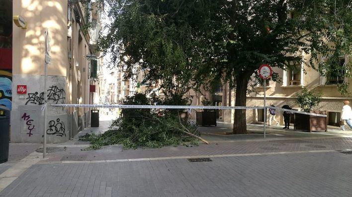 Cierran la calle Olmos por la caída de un árbol