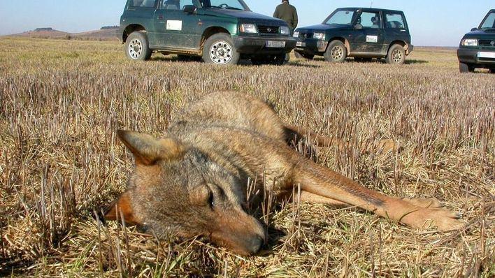 Bunyola es el tercer municipio del país en casos de envenenamiento animal