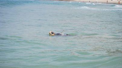 Sparrow sigue su aventura mediterránea tras pasar por aguas de Baleares