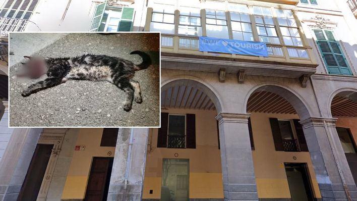 El PP suspende de militancia a los dos detenidos por torturar y matar al gato de Manacor