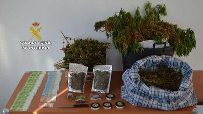Cae un grupo de británicos dedicado al cultivo y venta de marihuana en Calvià