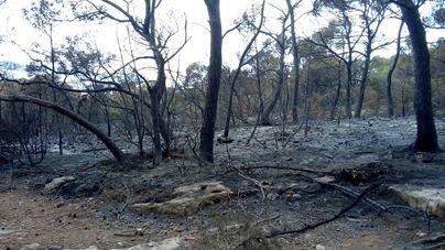 Extinguido el incendio que ha calcinado seis hectáreas de pinar en Sant Antoni