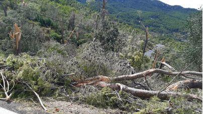 Vidal pedirá la declaración de 'zona catastrófica' para Banyalbufar, Valldemosa y Esporles