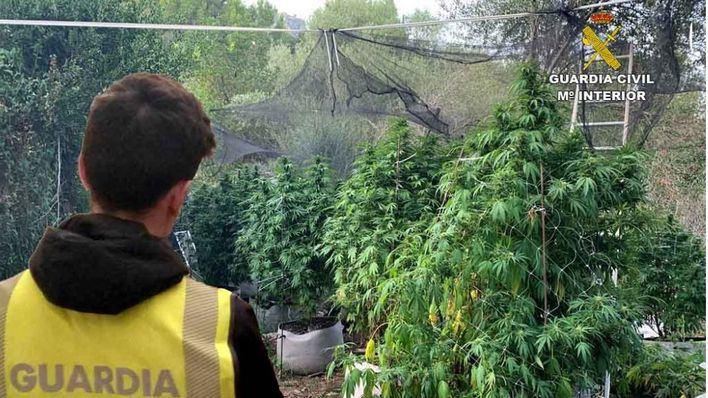 Tres detenidos en Esporles por cultivo, elaboración y venta de drogas