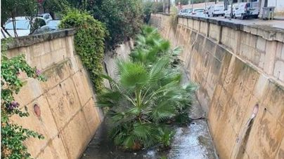 Ciudadanos alerta de la dejadez en el mantenimiento del torrente de Manacor