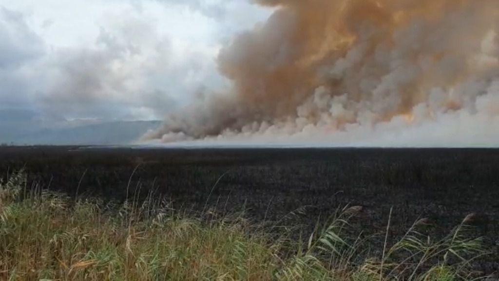 El incendio de s'Albufera sigue activo y afecta principalmente al parque natural