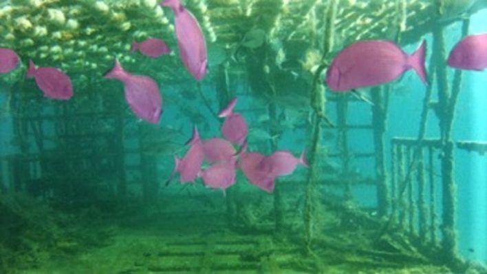 La UIB lidera un proyecto para identificar peces por medio de la inteligencia artificial