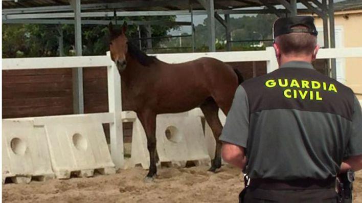 La Guardia Civil recupera en Pollença un caballo de 13.500 euros