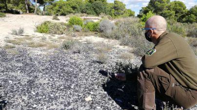 Levantan acta por dejar residuos peligrosos sobre antiguas dunas fósiles en el Cap de Cala Figuera