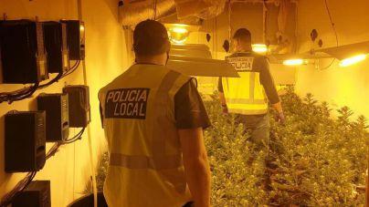 Clanes de la droga emplean a personas en apuros económicos para que les cultiven marihuana