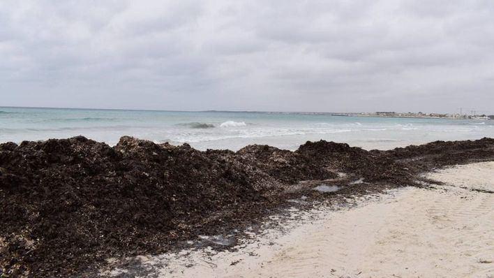 La dinámica costera en el Parque Natural de Es Trenc-Salobrar se analizará desde el aire con drones