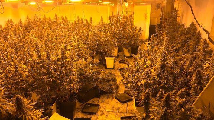 Incautados 350 kilos de marihuana a la mayor red de distribución de esta droga en Palma