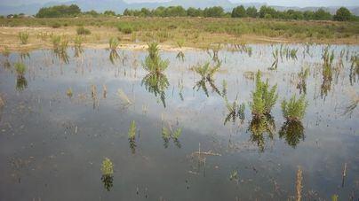 Las albuferas son zonas con alto nivel de riesgo ante el cambio climático