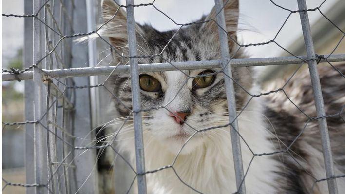Podemos reclama que caiga 'todo el peso de la ley' contra los envenenadores de gatos en Muro