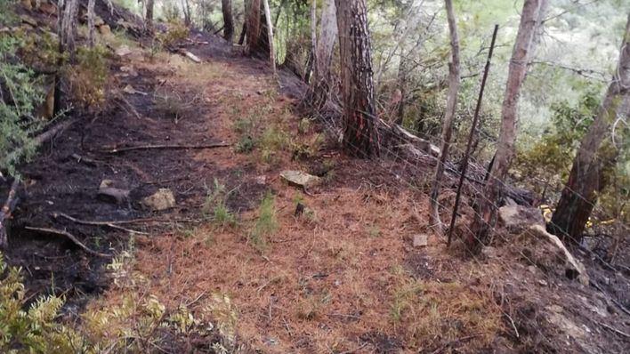 Arde una superficie de 2.000 metros de pinar en una zona forestal de Andratx