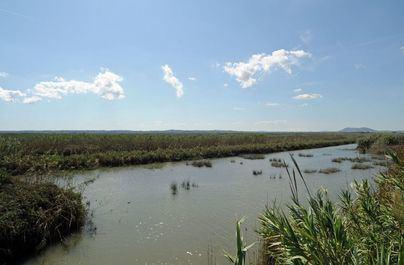 Medio Ambiente levanta 140 actas por pesca furtiva en s'Albufera y s'Albufereta