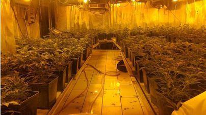 Redada en La Soledat: Incautadas 1.500 plantas de marihuana y 4 detenidos