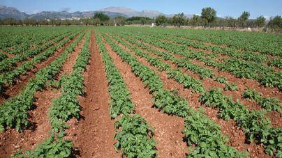 El sector agroalimentario aguanta el tipo pese a la crisis del coronavirus