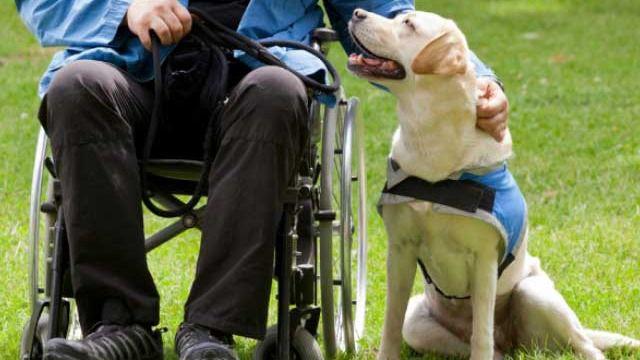 El PP pide al IMAS que otorgue ayudas para los perros-guía